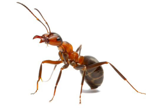 4 ways to get rid of ants wikihow best garden ideas. Black Bedroom Furniture Sets. Home Design Ideas