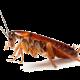img-cockroach