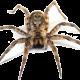 img-spider