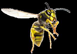 img-wasp